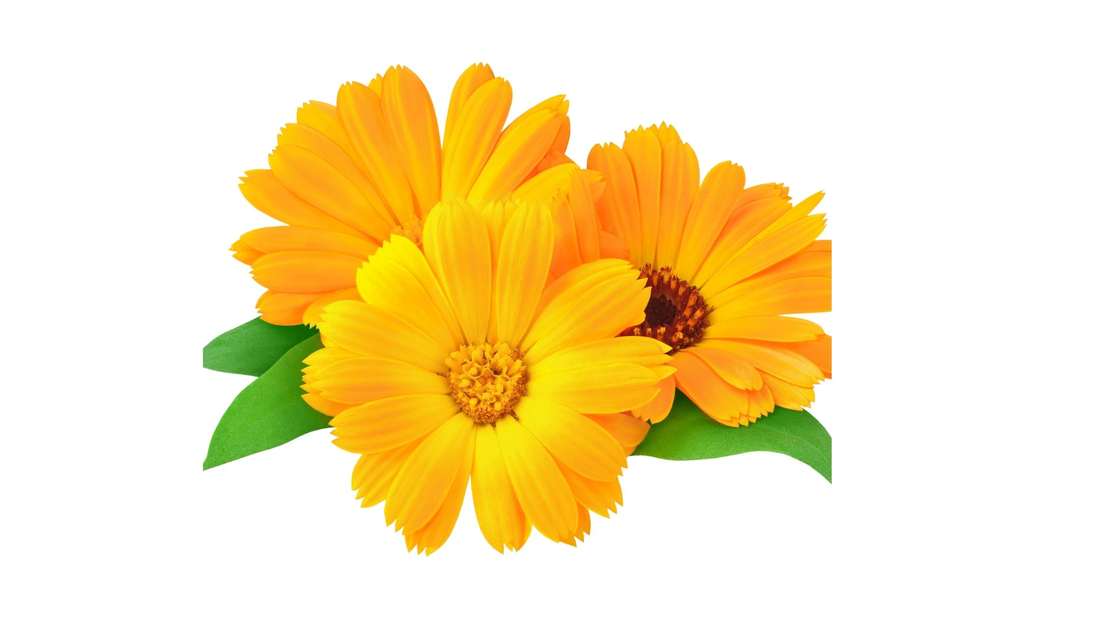 Calendula and mallow Remedies to Reduce Vaginal Dryness