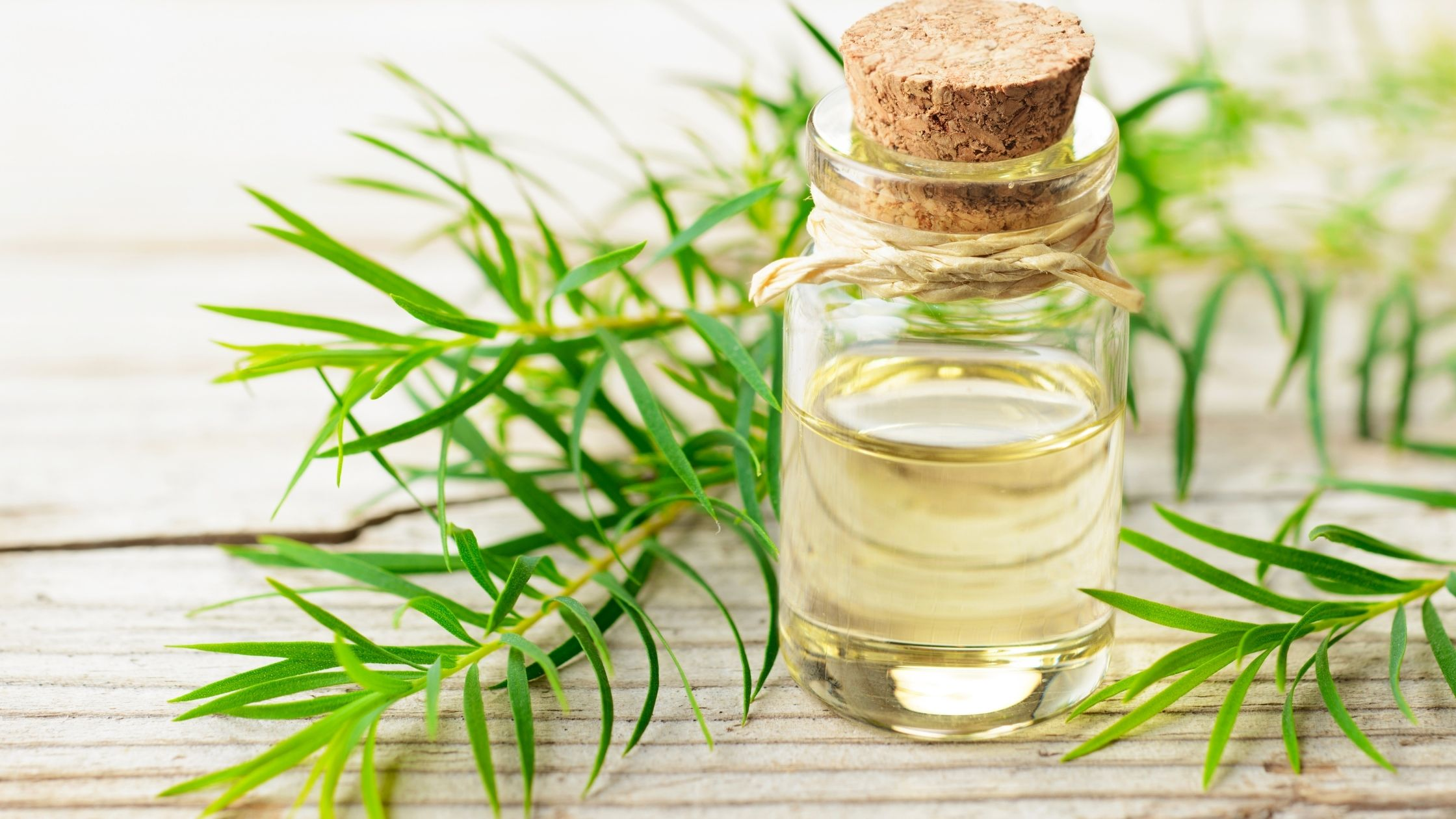 Tea tree oil Remedies to Reduce Vaginal Dryness